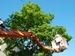 Request a Street Tree Service or Planting - cherry picker trimming treetop