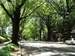 DC Assessment of Urban Forest Resources and Strategy - urban tree-lined street