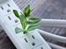 Energy Savings Initiatives - seedling growing out of power strip outlet