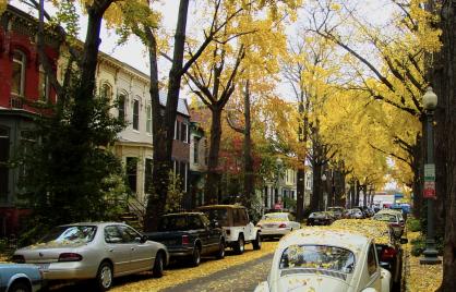 ginkgo tree lined street in DC