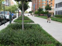 Green Infrastructure - sidewalk with landscape area