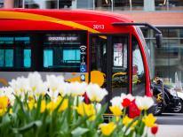 circulator bus passing tulips