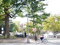 urban tree-lined street with femail bicyclist