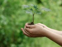 Green Grant Initiative - a child's hands cupping a tree sapling