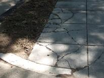 Sidewalk Repair - a cracked concrete city sidewalk and planting bed area prior to repair